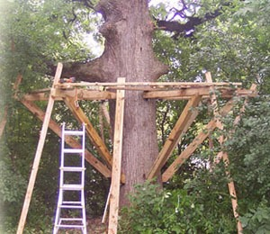 How to Build a Tree House Yourself Safe Tree House Construction
